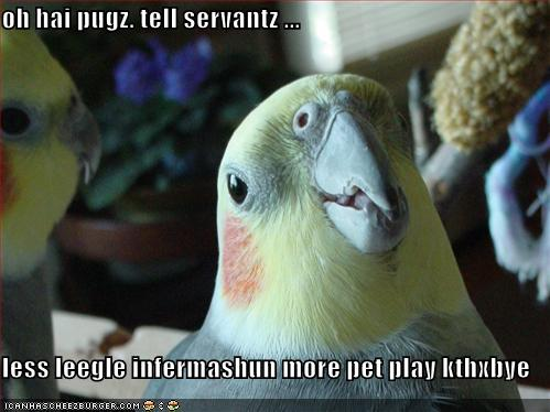 A Bird Message for the Pugs
