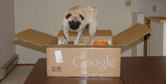Little Sheba the Hug Pug and her new Blue Google Mini